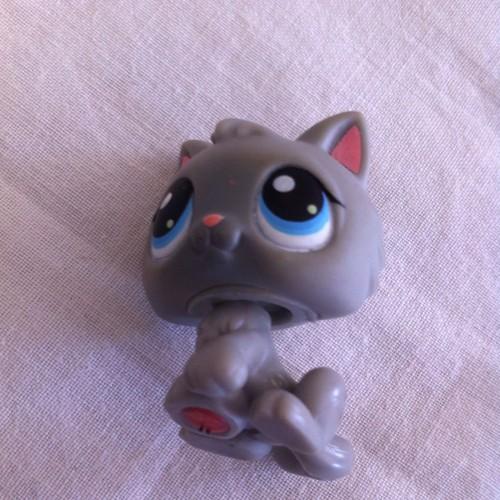Littlest petshop chaton 66 achat et vente - Petshop chaton ...