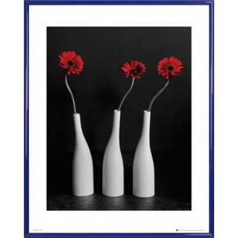 Mini Poster Encadre Fleurs Three Gerbera Daisies In Deep Red