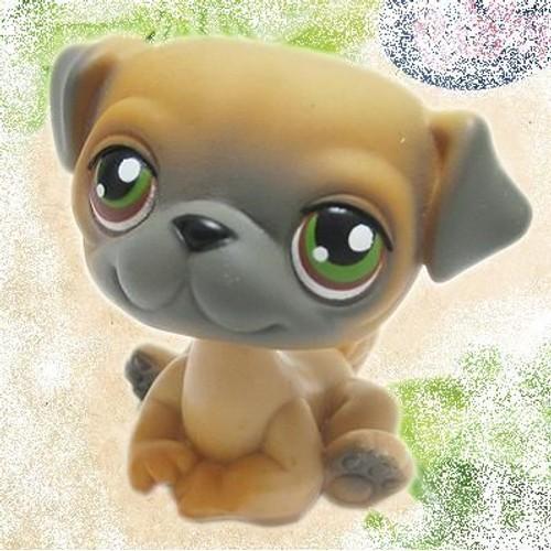 Petshop premier chien chiot b b bulldog carling pet shop 2 - Chien pet shop ...