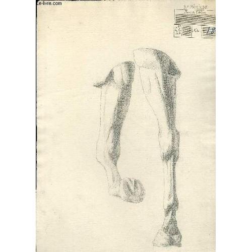 un dessin original au crayon papier des avant bras genoux boulets et sabots d 39 un cheval. Black Bedroom Furniture Sets. Home Design Ideas