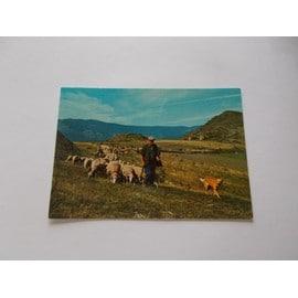 Troupeau De Moutons En Cevennes Gard